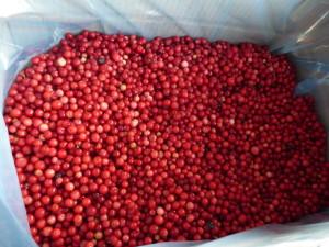 Замразени червени боровинки  замразени (IQF) и пюре